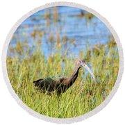 An Ibis In The Grass Round Beach Towel