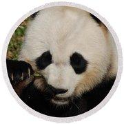 An Up Close Look At A Giant Panda Bear Round Beach Towel