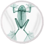 An X-ray Of A Flying Frog Round Beach Towel