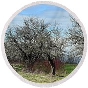 Ancient Apples Budding Out Round Beach Towel