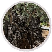 Ancient Olive Tree Round Beach Towel