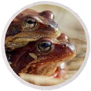 And Then I Found You. European Common Brown Frog Round Beach Towel