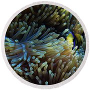 Anemonefish Hiding Round Beach Towel