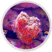 Anemones In Monterey Aquarium-california   Round Beach Towel