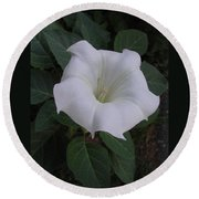 Angel Trumpet - Color Round Beach Towel