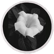 Angel Trumpet Round Beach Towel