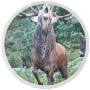 Angry Stag Round Beach Towel