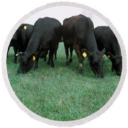 Angus Cattle Round Beach Towel