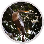 Anhinga Water Fowl Round Beach Towel