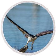 Animal - Bird - Osprey Catching A Fish Round Beach Towel