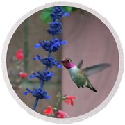 Anna's Hummingbird Feasting At Blue Salvia Round Beach Towel