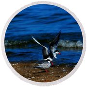 Another One Take A Tern Round Beach Towel