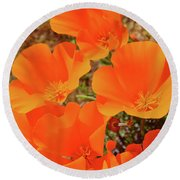 Antelope Valley Poppy Portrait Round Beach Towel