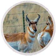 Antelopes Round Beach Towel