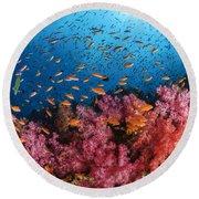 Anthias Fish And Soft Corals, Fiji Round Beach Towel