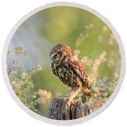 Anticipation - Little Owl Staring At Its Prey Round Beach Towel