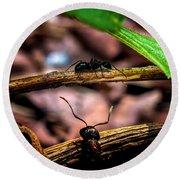 Ants Adventure Round Beach Towel by Bob Orsillo