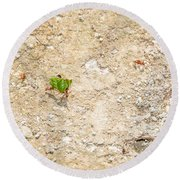 Ants At Oxtankah Round Beach Towel