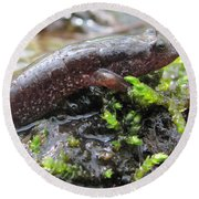 Appalachian Seal Salamander Round Beach Towel