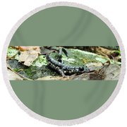 Appalachian Slimy Salamander Round Beach Towel