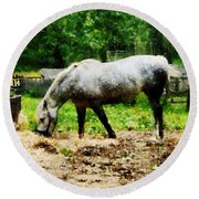 Appaloosa Eating Hay Round Beach Towel