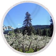Apple Orchard In Bloom Round Beach Towel