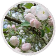 Apple Tree Blossoms Art Prints Apple Blossom Buds Baslee Troutman Round Beach Towel