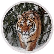 Approaching Tiger Round Beach Towel
