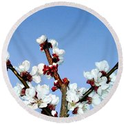 Apricot Blossoms Round Beach Towel