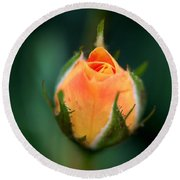 Apricot Rose Bud 1 Round Beach Towel