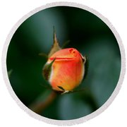 Apricot Rose Bud 2 Round Beach Towel