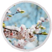Apricots Bloom Round Beach Towel