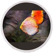 Aquarium Orange Spotted Fish Round Beach Towel