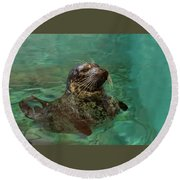 Aquarium Seal  Round Beach Towel