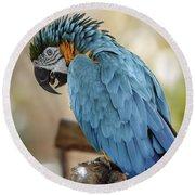 Ara Parrot Round Beach Towel