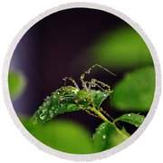 Arachnishower Round Beach Towel