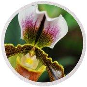 Arboretum Tropical House Orchid II Round Beach Towel