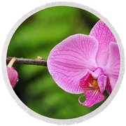 Arboretum Tropical House Orchid Round Beach Towel