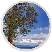 Arbutus Tree At Rathtrevor Beach British Columbia Round Beach Towel