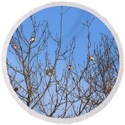 Arctic Buntings Round Beach Towel