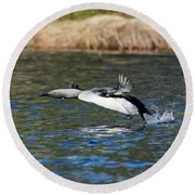 Arctic Loon Take Off Round Beach Towel