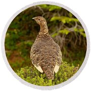 Arctic Willow Ptarmigan Round Beach Towel
