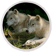 Arctic Wolf Pictures 1268 Round Beach Towel