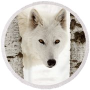 Arctic Wolf Seen Between Two Trees In Winter Round Beach Towel