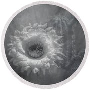 Argentine Giant Painted Bw Round Beach Towel