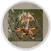 Argiope Spider Wrapping A Hornet Round Beach Towel