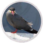 Arica Chile Sea Bird Round Beach Towel