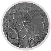 Arizona Sycamore Tree Filtered 022714 Round Beach Towel