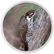 Arizona Woodpecker Round Beach Towel