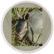Armadillo By Morning Round Beach Towel